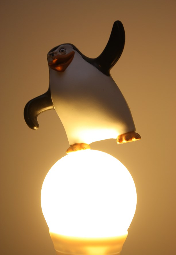 Color from the light bulb feels uninteresting, and the penguin is underexposed.