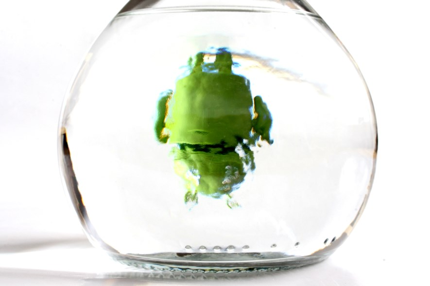 The Android droid behind a bottle of grappa.