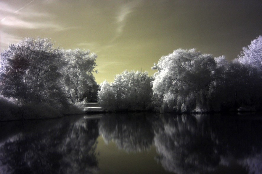 Quite typical infrared shot with some basic post-processing. Looking wacky.