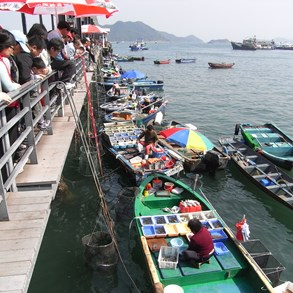 You can actually buy fish directly from the boats.