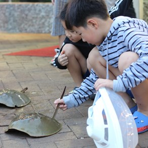 Children playing with horseshoe crabs.